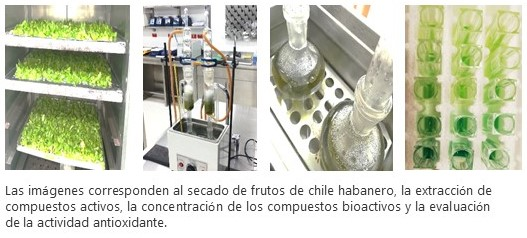 Investigación plantas y propiedades medicinales