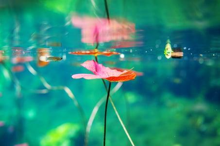 cennote-underwater-P5GY3LW