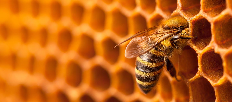 foto del articulo La miel y sus usos terapéuticos